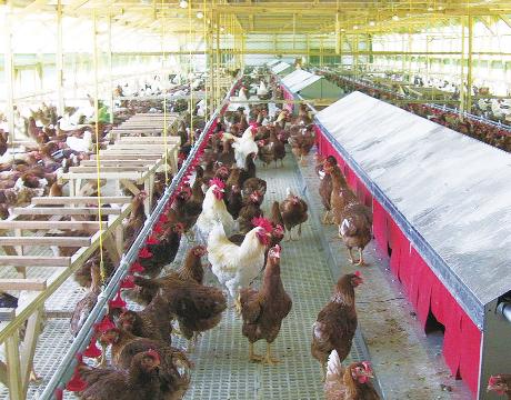 中嶋製作所の養鶏設備